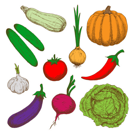 spicy chilli: Color sketches of healthy farm tomato and crunchy green cabbage, cucumbers, spicy red chilli pepper and sprouted onion, garlic and ripe orange pumpkin, tasty eggplant, beet and juicy zucchini vegetables Illustration