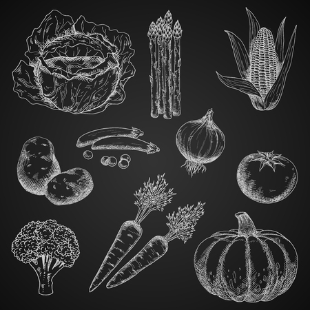 healthful: Healthful vegetables chalk sketches on blackboard with tomato and broccoli, onion and corn, potato and pea, carrot and cabbage, asparagus and pumpkin. Restaurant menu, vegetarian food, agriculture design usage Illustration