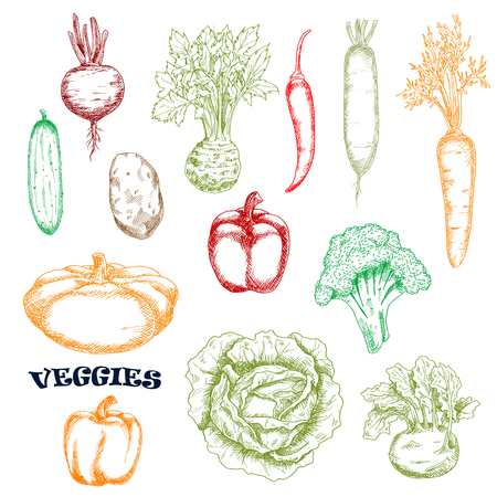 potato salad: Carrot and cucumber, potato and cabbage, bell and chili peppers, broccoli and beet, pattypan, kohlrabi and radish vegetables sketches in retro style Illustration
