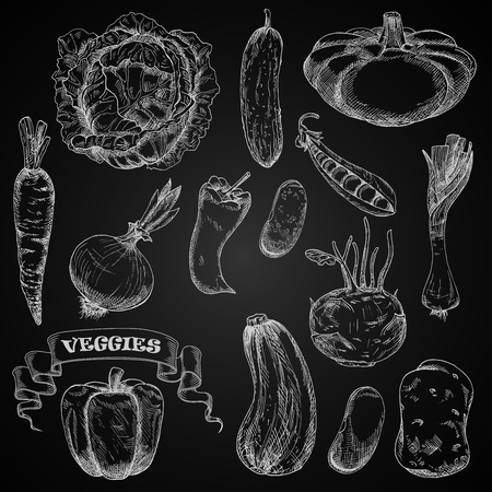 chalk drawing: Sketches of fresh farm vegetables chalked on a blackboard with cabbage and carrot, chilli and bell peppers, onion and potato, cucumber and  pea, beans, kohlrabi and leek, zucchini and pattypan squash, decorated by swirling ribbon banner