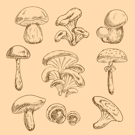 flavorful: Sketches of forest chanterelles and boletus, oysters and champignons, shiitake and dangerous amanita mushrooms. Old fashioned recipe book or kitchen interior accessories design