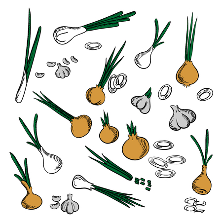 condiments: Fresh onion, leek and garlic vegetables icons with spicy onions with chopped green leaves, leek, sliced onion rings and peeled garlic cloves. Pungent condiments and spices, vegetarian recipe design usage