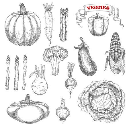 熟した秋野菜のキャベツとカボチャ、ナス、トウモロコシ、ピーマン、アスパラガス、ブロッコリー、ニンニク、大根、コールラビ、菓子鍋スカッ