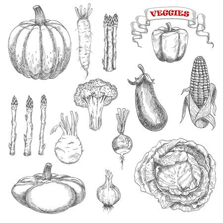 old fashioned vegetables: Old fashioned sketches of ripe autumnal vegetables with cabbage and pumpkin, eggplant and corn, bell pepper and asparagus, broccoli and garlic, daikon and kohlrabi, pattypan squash and radish Illustration