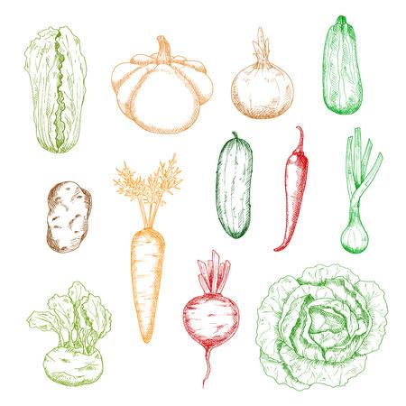 Sketches de carotte saine et l'oignon, le chou et la pomme de terre, le concombre et le piment, la courgette et la betterave, le chou-rave, échalote et pâtisson légumes de squash. Pour l'intérieur de la cuisine, la récolte de l'agriculture ou des thèmes du livre de recettes de conception