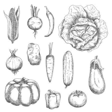 greengrocery: Engraving stylized veggies for kitchen accessories, recipe book, agriculture and farming design Illustration