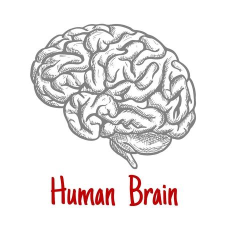 Vintage-Gravur Skizze des menschlichen Gehirns mit anatomisch detaillierte brainstem und Rautenhirns. Medizin, Wissenschaft oder Brainstorming-Konzept