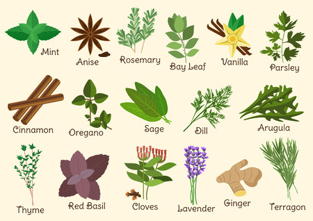 Herbs, condiment and spices with twigs and seeds of parsley, mint and rosemary, red basil and dill, anise star and thyme, cloves and oregano, cinnamon and ginger, bay leaf and vanilla, sage and arugula, tarragon and lavender