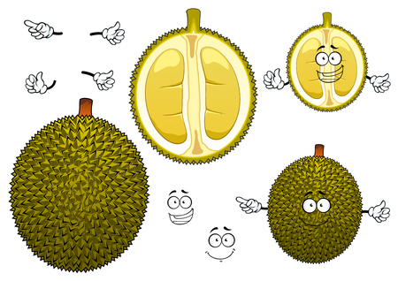 thai dessert: Thai exotic durian fruit with spiny dark green peel with segmented soft and mushy yellow flesh. Ripe fruit for dessert recipe, vegetarian healthy dessert menu or tropical cocktail design Illustration