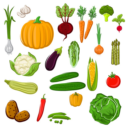 Tomato and pepper, eggplant and cabbage, corn and potato, onion and pumpkin, beet and carrot, broccoli and cauliflower, garlic and radish, asparagus and green pea, cucumber, chinese cabbage and zucchini vegetables for agriculture or cooking design Stock Illustratie