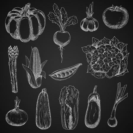 veggies: Chalk sketches of corn cob and onion, pumpkin and tomato, beet and pea, eggplant and garlic, zucchini and cauliflower, scallion, asparagus and chinese cabbage vegetables on blackboard. Vintage engraving stylized veggies for restaurant menu board design Illustration