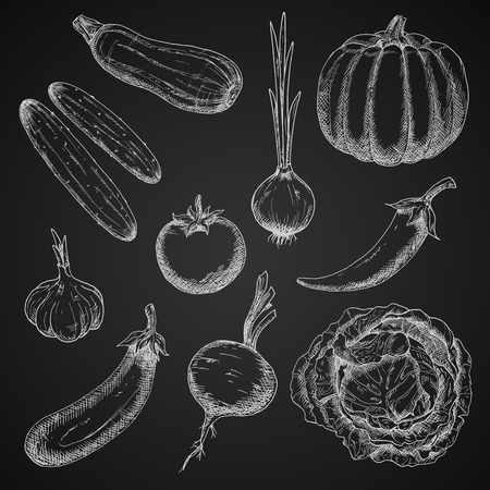 garlic: Freshly plucked ripe tomato and onion, chilli pepper and cabbage, eggplant and cucumbers, pumpkin and beet, zucchini and garlic vegetables chalk sketches on blackboard. Restaurant board menu or farm market themes design usage