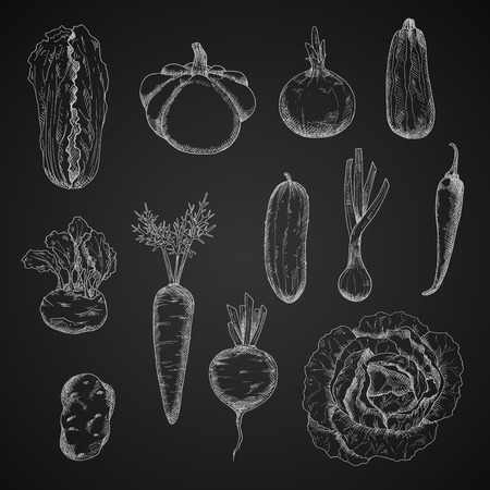 greengrocery: Chalkboard with sketched farm juicy carrot and cucumber, cabbage and beet, onion and chilli pepper, potato and kohlrabi, zucchini and scallion, pattypan squash and chinese cabbage vegetables. Agriculture harvest, vegetarian menu themes design