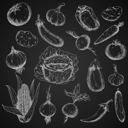 cayenne: Chalk sketched vegetables in engraving style on blackboard with tomato and eggplant, potato and carrot, onion and cabbage, cayenne and bell pepper, beet and garlic, cucumber and corn. Agriculture harvest, vegetarian food, recipe book or cooking theme