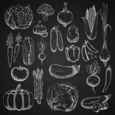 veggies: Vegetables chalk sketches on blackboard with tomato, chilli and bell peppers, carrot and cabbage, eggplant and potato, cucumber and onion, corn cob and beet, broccoli and pea, garlic and pumpkin, zucchini and radish, cauliflower and chinese cabbage, scall