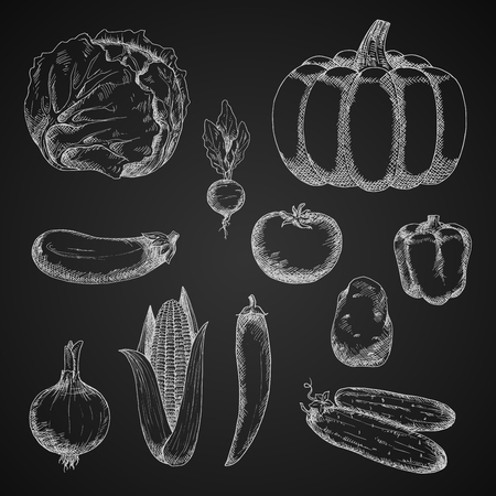 cayenne pepper: Vintage sketches of autumn harvest vegetables with chalk drawings of ripe pumpkin, tomato, onion, eggplant, potato, cabbage, sweet bell pepper, fresh cob of sweet corn, crunchy cucumbers and radish, spicy cayenne pepper on chalkboard