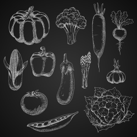 bell tomato: Farm tomato, zesty radish and daikon, garlic and corn, pea and eggplant, crunchy broccoli and cauliflower, bell pepper and sunny pumpkin, bundle of asparagus vegetables. Chalk sketches on blackboard Illustration