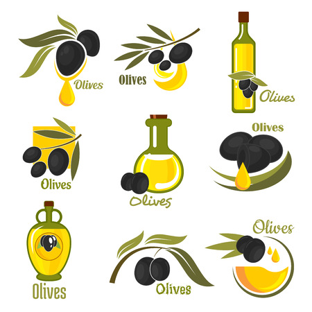 oil crops: Olives black fruits with golden oil drops and glass bottles of olive oil, supplemented by branches of olive tree with green leaves. Agriculture and healthy food themes