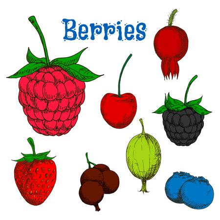 currants: Ripe red raspberry and strawberry, cherry and briar, blackberry and green gooseberry, black currant and blueberry fruits. Colorful berry sketches for kitchen theme or agriculture design