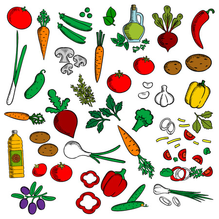 oil crops: Colorful vegetarian salad ingredients icon with healthy fresh tomatoes, olives, green onions, carrots, mushrooms, garlic, peppers, potatoes, beets, sweet peas and cucumbers vegetables, sunflower and olive oil, spicy herbs. Sketch style Illustration