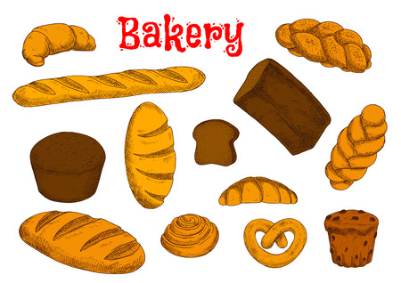 bread rolls: Rye bread and wheat long loaves, french baguette and croissants, cinnamon roll, cupcake with raisins, sweet braided buns and bavarian pretzel. Bakery and pastry sketches