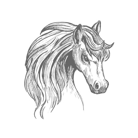 Sketch illustration of beautiful young horse head with thick wavy mane and gentle glance. Great for wildlife symbol or t-shirt print design usage