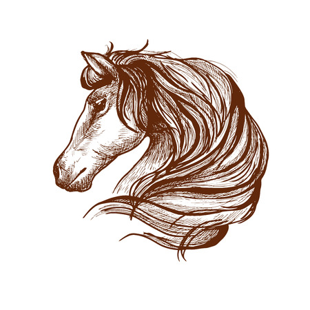 mane: Graceful horse engraving sketch icon with profile of purebred stallion head with flowing mane. Use as equestrian sport symbol or horse club mascot design