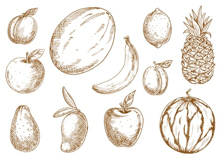 organically: Organically grown selected apples, banana and lemon, plum, mango, pineapple and melon, apricot and avocado, watermelon fruits sketches. Agriculture harvest, recipe book, healthy food design usage Illustration