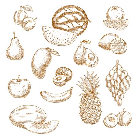 Vintage schetsen van geheel en gehalveerd verse tuin en de tropische vruchten met tros druiven, sinaasappel, citroen, appel, perzik, peer, mango, avocado, banaan, ananas, kiwi, watermeloen, pruim en meloen. Retro tekening pictogrammen voor receptenboek, vegetarisch menu, agricu
