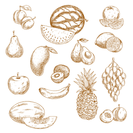 pear: Vintage sketches of whole and halved fresh garden and tropical fruits with bunch of grape, orange, lemon, apple, peach, pear, mango, avocado, banana, pineapple, kiwi, watermelon, plum and melon. Retro drawing icons for recipe book, vegetarian menu, agricu