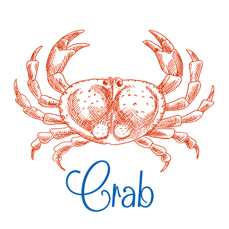 pincers: Large red ocean crab isolated sketch icon with raised pincers and text Crab below. Seafood menu, zoo aquarium mascot, t-shirt print design usage Illustration