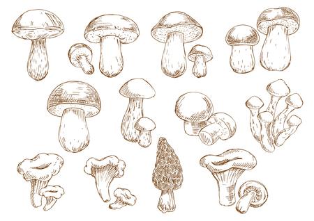Incisione schizzi d'epoca di funghi commestibili con icone isolati di porcini, porcini, porcini, champignon, finferli, Morel e miele agarics. Oltre al vecchio ricettario stile, menù vegetariano, cucina accessori per interni di design Archivio Fotografico - 55305285