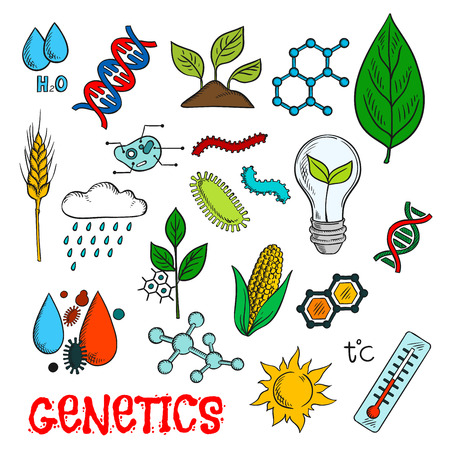 agriculture industry: Genetic technologies in agriculture industry and science research experiments icon with colorful sketches of DNA and molecular models, corn vegetable, wheat ear and seedlings, plant cell structure, chemical formulas, pests and weather control, temperature Illustration