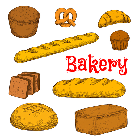 wholemeal: Flavorful rye, whole grain and wheat bread loaves, crispy french baguette and croissant, chocolate cupcake, toasts and sweet soft pretzel sketch icon. Colorful bakery and pastry products for healthy food design