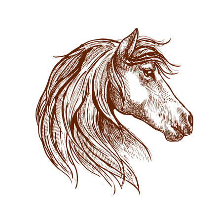 horse show: Vintage engraving sketch of wild mare head with silky mane blowing in the wind. Use as nature mascot, equestrian club or horse show design