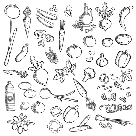 veggies: Sketched ripe tomatoes, fresh olives, garlic, mushrooms, carrots, green onion, cayenne and bell peppers, broccolies, beetroots, potatoes, cucumbers and sweet peas vegetables, olive and sunflower oil, parsley, dill and basil. Fresh vegetables and condiment Illustration