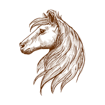 Wilde Pferdekopf Jahrgang Gravur Skizze Symbol mit Profil der jungen Hengst mit langen Schopf und fließenden curl von Mähne. Verwenden Sie als Art Maskottchen oder Reitclub Symbolentwurf Standard-Bild - 55946210