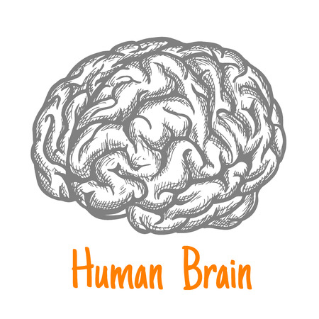 creativity symbol: Human brain engraving stylized sketch symbol in gray colors for mind, creativity or health care theme design with caption Human Brain below
