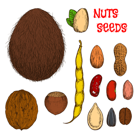 raw: Sweet almond, hazelnut, walnut and pistachio nuts, coconut fruit, roasted coffee, peanuts with shell and common beans with pod, dry pumpkin and sunflower seeds retro stylized colored sketches. Use as healthy food or confectionery design