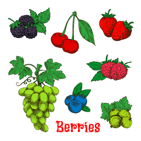 blackberries: Fresh bunch of sweet and juicy green grape, red raspberries, strawberries and cherries, blackberries, gooseberries and blueberries fruits sketch symbols. Colorful appetizing berries with leaves design for agriculture harvest and organic farming concept