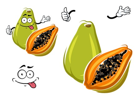 Cartoon whole and halved exotic hawaiian green papaya fruit with juicy orange flesh with small black seeds clustered in the center. May be used as vegetarian dessert, agriculture or tropical recipe design