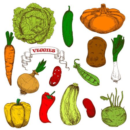 greengrocer: Healthful organic fresh carrot, onion, pumpkin pea leek cayenne pepper, beans potato cabbage bell pepper, zucchini kohlrabi vegetables engraving sketches. Agriculture harvest, vegetarian restaurant menu or recipe book design