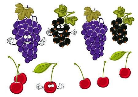 funny fruit: Vine of delicious violet grapes, ripe sweet cherries and healthful black currants fruits cartoon characters with green leaves and funny faces. Use as fruit dessert recipe or juice packaging design