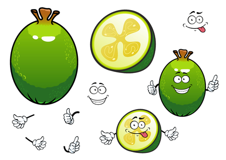 pulp: Cartoon fresh green whole and halved feijoa fruit characters with sweet juicy flesh and gelatinous seed pulp in the center. Happy smiling pineapple guava characters for healthy dessert recipe, juice packaging or agriculture design