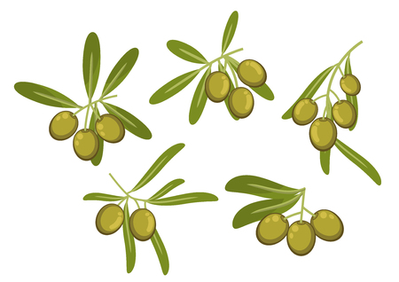 Fresh italian green olives icons of olive tree branches with green leaves and ripe fruits. May be used as olive oil packaging or vegetarian healthy food design