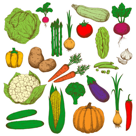cayenne pepper: Farm fresh green cabbages and broccoli, peas and zucchini, sweet orange bell pepper and carrots, pumpkin and corn, spicy garlic, onions and cayenne pepper, crunchy cucumbers and cauliflower, asparagus and radish, ripe potatoes and tomato, eggplant and bee
