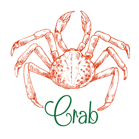 hardshell: Japanese snow crab sketch symbol with rounded body and long thin legs. Use as seafood restaurant, underwater wildlife or oriental cuisine design