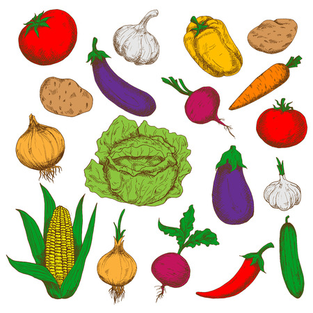 cayenne: Farm grown fresh green cabbage and cucumber, ripe potatoes, beetroots and eggplants, red tomatoes and cayenne pepper, sweet corn, carrot and bell pepper, pungent garlics and onions vegetables. Healthy food and agriculture design usage Illustration