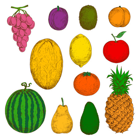 greengrocery: Sunny yellow canary melon and pineapple, pear and lemon, juicy orange, peach and grapes, apple and plum, green kiwi, avocado and watermelon fruits sketch symbols. Use as organic farming and healthy dessert design