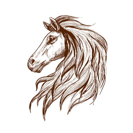 mane: Gorgeous arabian racehorse vintage engraving sketch with profile of young stallion head with long mane. May be use as horse club and horse racing sporting symbol design